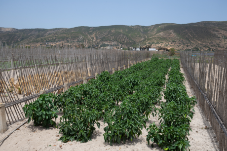 sistema agroflorestal na tunísia 1