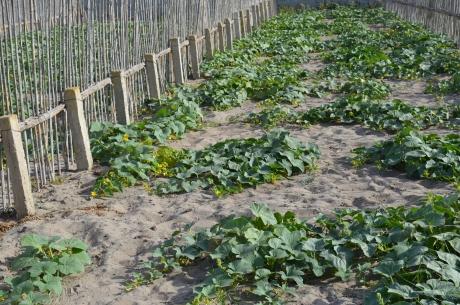 sistema agroflorestal na tunísia 2