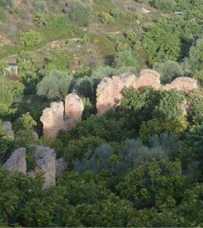 Sistema agroflorestal da Tunísia é reconhecido como patrimônio agrícola global