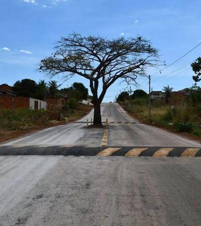 Pé de cajá amado por moradores foi mantido em asfaltamento de rua em cidade do Tocantins
