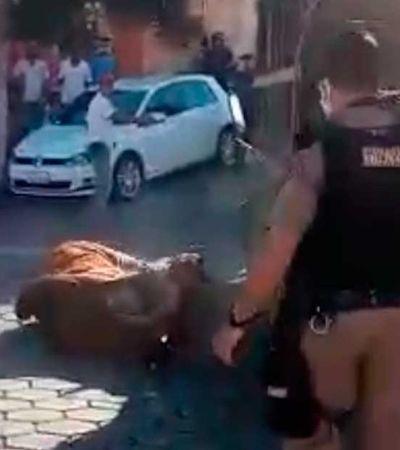 Polícia é acusada de matar boi já dominado com tiros de fuzil; animal havia atacado idoso