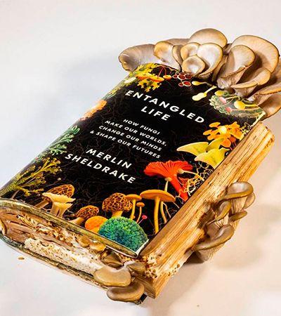 Autor de livro sobre cogumelos deixa que os fungos comam seu livro para depois comê-los