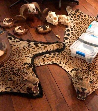 Polícia encontra tapetes de onça e cobras em apartamento na zona sul do Rio