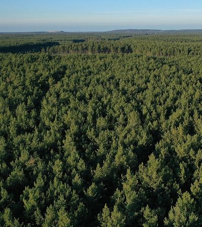 Meio ambiente pode ser ainda mais ameaçado com florestas artificiais; entenda
