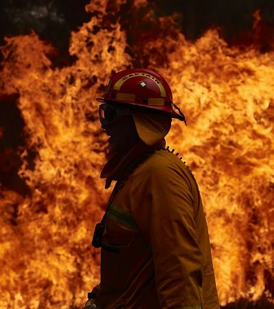 Austrália: quase três bilhões de animais foram mortos ou deslocados por incêndios