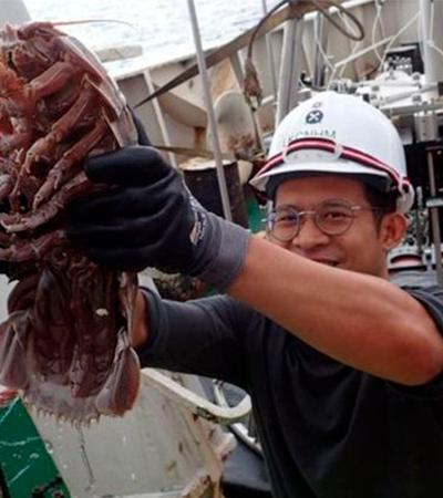 Barata gigante encontrada nas profundezas do oceano pode chegar aos 50 centímetros