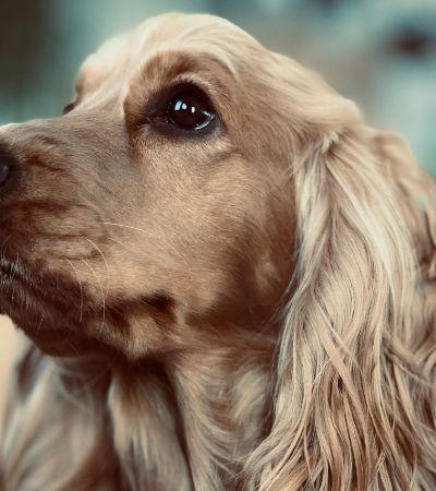 Cachorros podem ver fantasmas? A ciência quer saber