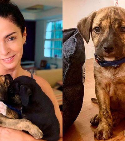 ONG mostra áudios de Claudia Ohana pedindo para devolver cães