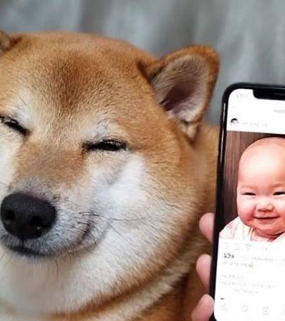 Encontraram o cachorro do meme certo para todos os tipos de situações