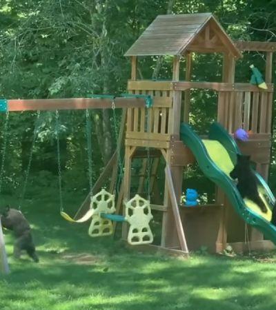 Mamãe urso resolveu levar os filhos para brincar no parquinho de uma família, que fotografou a farra