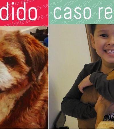 'Procura-se Cachorro': página no Instagram é esperança para quem perdeu cãozinho fujão
