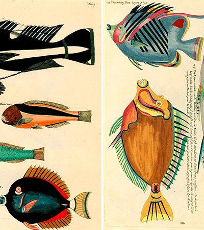 As incríveis (e loucas) ilustrações do mais antigo livro impresso sobre a vida marinha que se tem notícia