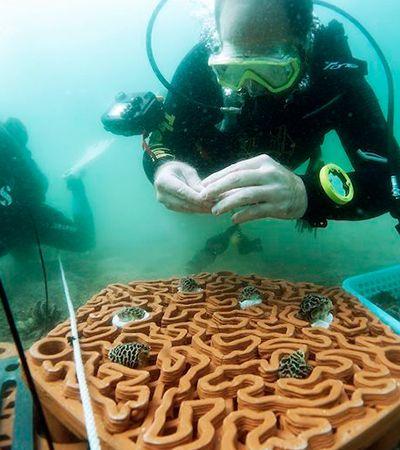 Peças de terracota feitas com impressão 3D irão salvar barreira de corais em Hong Kong