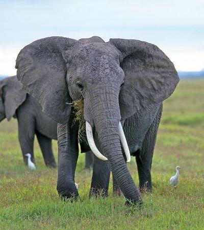 O Quênia está tendo um baby boom de elefantes e isso é maravilhoso