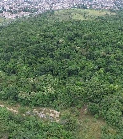 Governo federal pode destruir santuário de pássaros com novo autódromo no RJ
