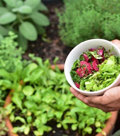 Restaurante comunitário em Brasília cria horta para abastecer sua cozinha