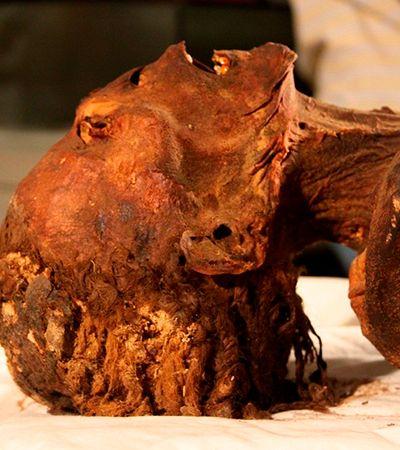 Ataque cardíaco há 3 mil anos pode ter matado 'múmia que grita'