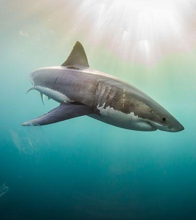 Sua rotina de beleza pode estar matando tubarões; entenda