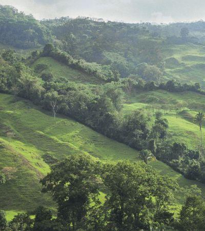 Como a Costa Rica desacelerou, parou e depois reverteu o desmatamento de florestas tropicais