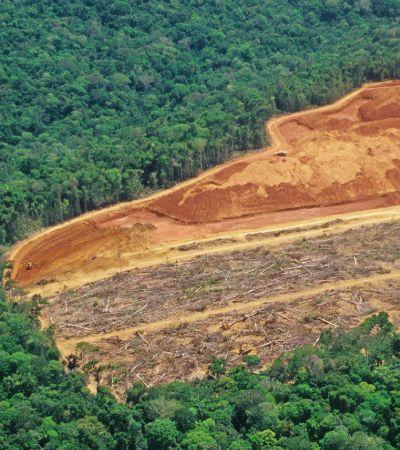 Reino Unido anuncia nova lei pelo meio ambiente; veja como ela afeta o Brasil