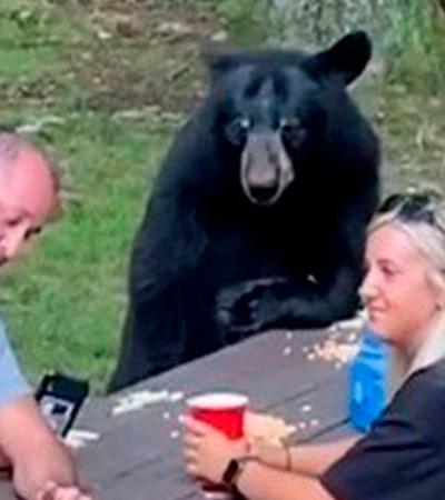 Este urso sentou à mesa e comeu pão com creme de amendoim com turistas