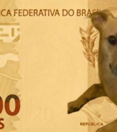 Vira-lata caramelo que viralizou em nota de R$ 200 se chama Pipi; saiba mais