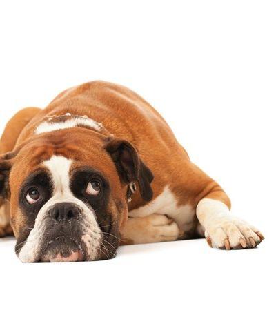 Vereadores aprovam projeto de lei que, pasmem, proíbe cães de latir