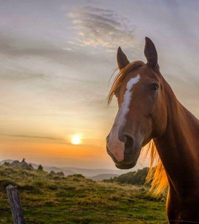 Polícia investiga ação de seitas satanistas em mutilações, incluindo genitais, contra cavalos