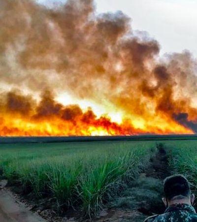 Pantanal perde 12% da vida em incêndio descontrolado e jaguatirica é novo animal a ser sacrificado