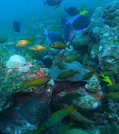 Novos ecossistemas de recifes são descobertos na Bahia por pesquisadores ligados à USP