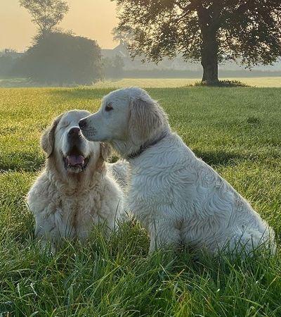Cachorro cego é só amor e alegria após ganhar cão-guia para chamar de seu