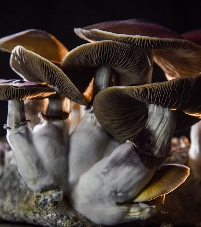 Por que esta cidade no Michigan decidiu descriminalizar os cogumelos alucinógenos