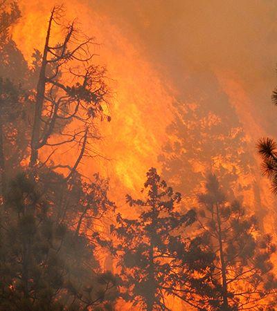 Maconha: incêndios nos EUA ameaçam indústria canábica da costa Oeste