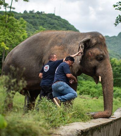 Elefante mais solitário do mundo ganha liberdade após 35 anos e expõe crueldade de zoos
