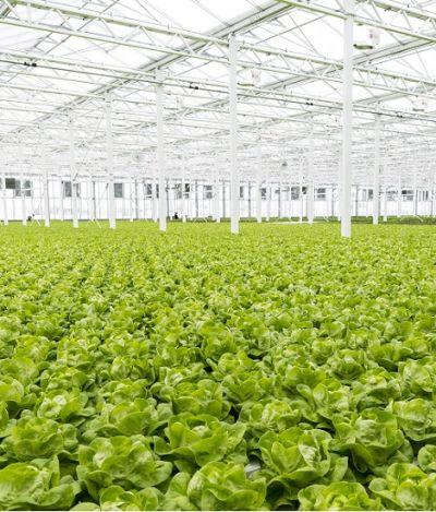 Maior estufa de telhado do mundo equivale a três campos de futebol e alimenta 2% de Montreal