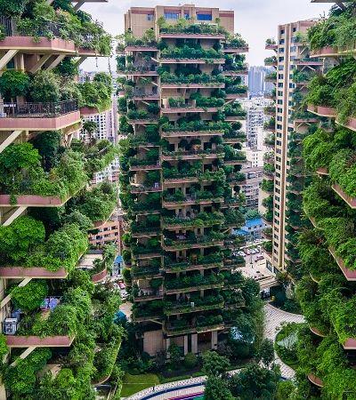 China: infestação de mosquitos em prédios é alerta do meio ambiente
