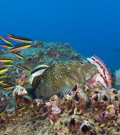 30 novas espécies marinhas descobertas nas profundezas de Galápagos