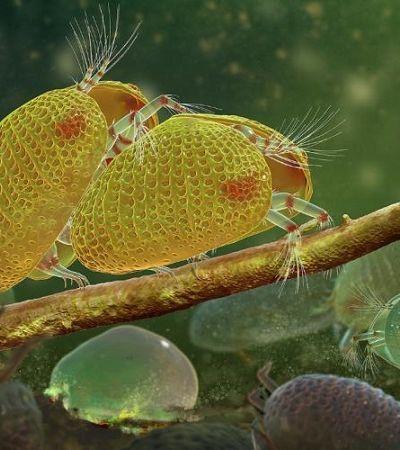 Espermatozoides de 100 milhões de anos são encontrados intactos e impressionam pelo tamanho