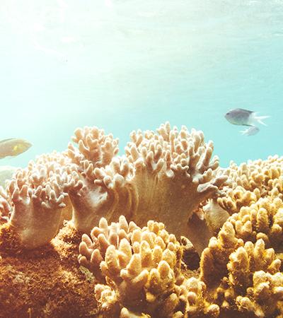 Esponjas marinhas se tornaram aliadas na produção de enxertos ósseos; saiba como