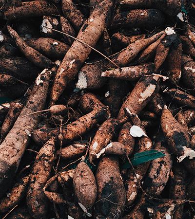 A mandioca, gostosa e versátil, faz bem à saúde e foi até o 'alimento do século'