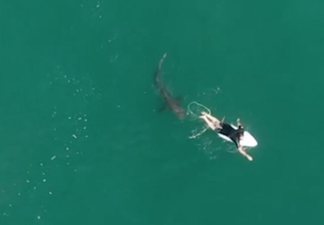 Surfista escapa por pouco de tubarão branco e só descobre depois em vídeo; assista
