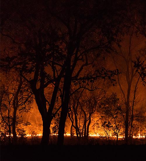 Queimadas no Pantanal e agronegócio: solução também passa por mudança na alimentação