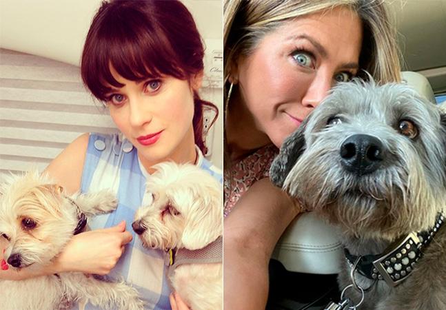 Celebridades adotam cães da rua e de abrigos e incentivam fãs a fazer o mesmo