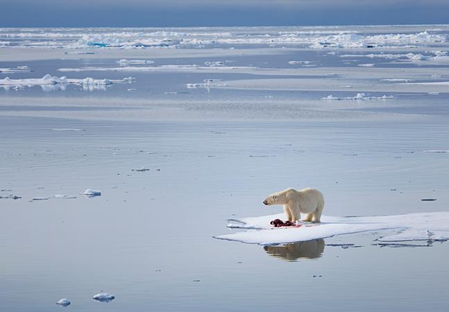 Degelo do Ártico resultado do aquecimento global pode liberar vírus e bactérias mortais