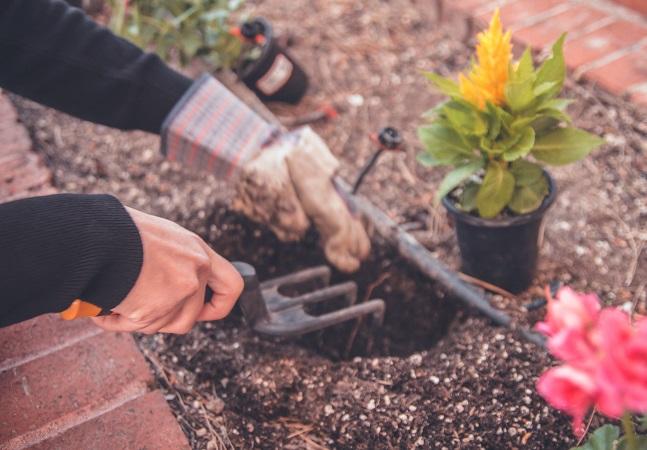 Uma singela investida na jardinagem pode ser mais eficiente que 8 sessões de meditação