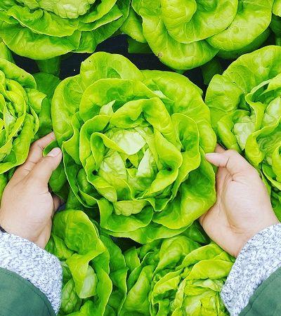 Produção de hortaliças orgânicas é tema de série de lives criada pela Embrapa