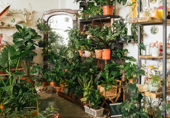 2 a cada 5 espécies de plantas no mundo estão em risco de extinção