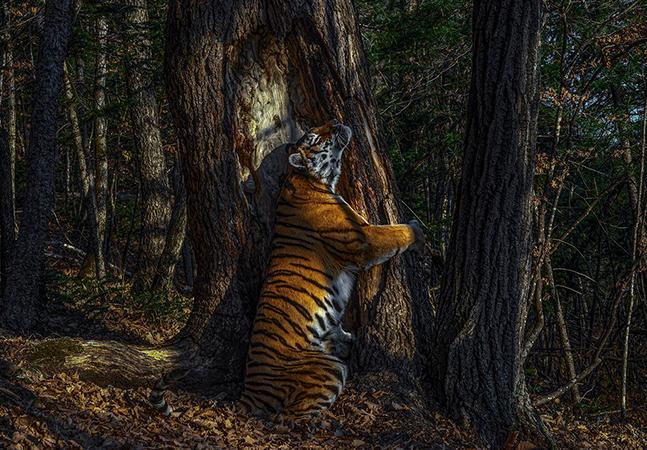 A vida selvagem nas incríveis fotos vencedoras do concurso anual Wildlife Photographer of the Year