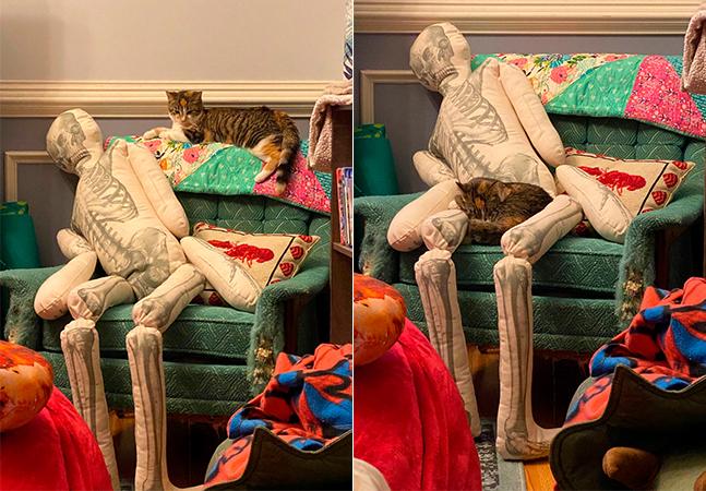 Como seu gato reagiria se de repente você morresse em seu sofá?