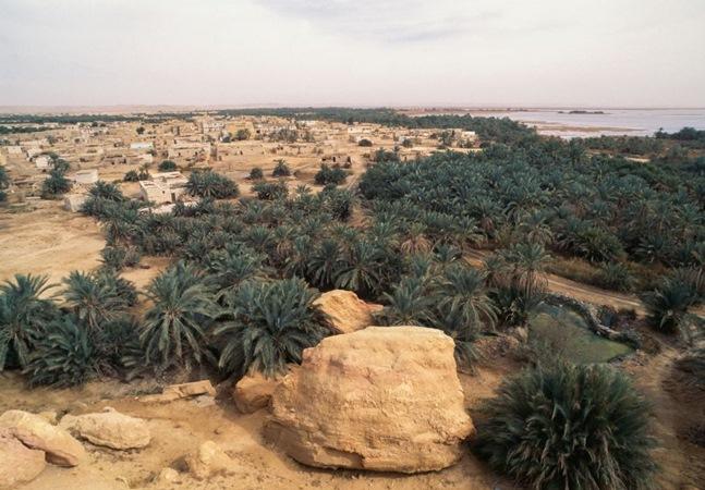 Estudo descobre 1,8 bilhão de árvores no deserto do Saara e no Sahel